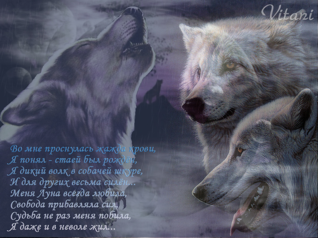 http://balto.ru/images/fbfiles/files/__________-dbe1feebe3805228158b7baa13328674.jpg