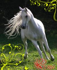 http://balto.ru/images/fbfiles/images/cd2785ebf3ef______.jpg